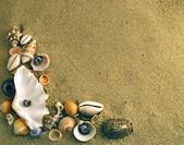 Mediterranean seashells — Stock Photo