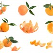 Different cultivars of tangerines - Stock Photo