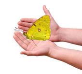 Borboleta nas mãos — Fotografia Stock