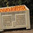 Stock Photo: Haevested tangerines in crate
