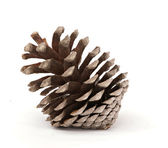 A mature pine cone — Stock Photo