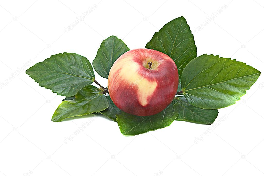Red apple on leaves — Stock Photo #1906364