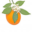 Orange and flower - Stock Photo