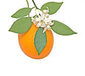 Orange and flower — Stock Photo