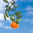 Foto Stock: Tangerine on sky background