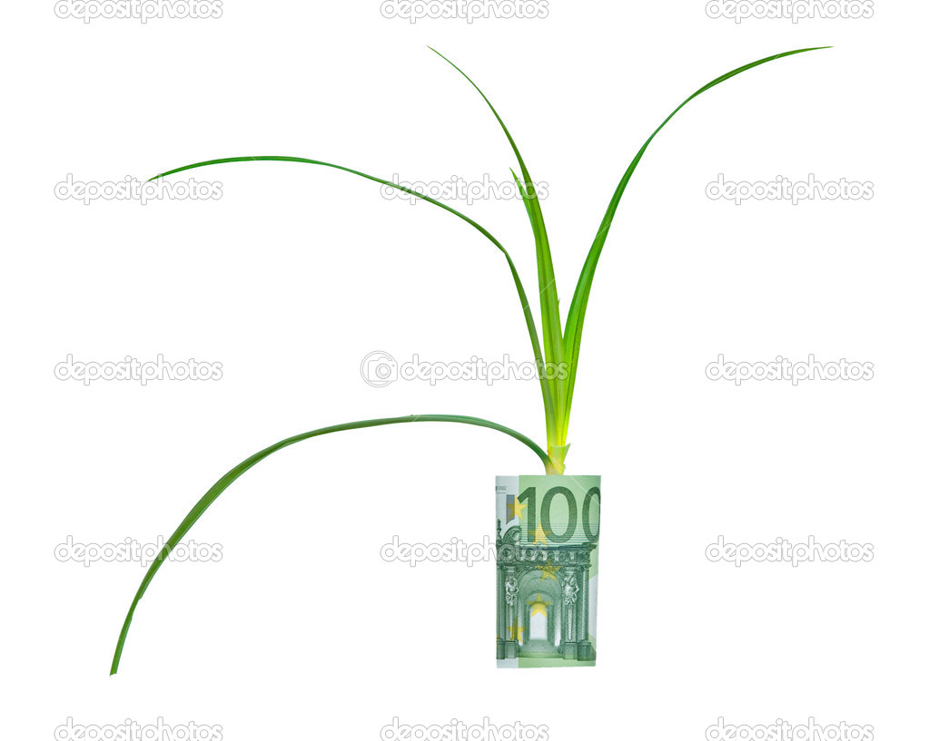 Sedge plant growing from euro bill — Stock Photo #2677331