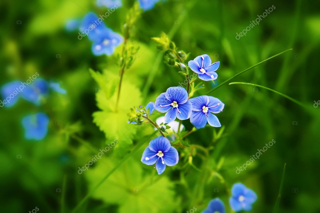 Цветы для бизнеса