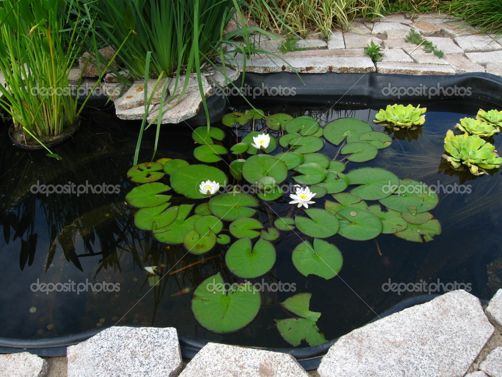Decorative pond stock photo hgalina 1801102 for Decorative ponds