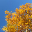 Stock Photo: Autumn birches