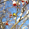 Winter view with titmouse — Stock Photo