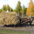 Horse and cart with hay — Stock Photo
