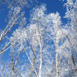 Frosty trees on blue sky — Stock Photo