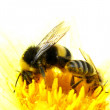Stock Photo: Bees pick pollen