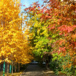 Colourful autumn chord — Stock Photo