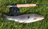 Rainbow trout and rod — Stock Photo