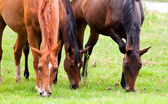 Three horses eating grass — Stock Photo