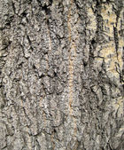 Backgrounds, Tree cortex — Stock Photo