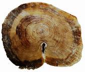 Sfondi, struttura in legno — Foto Stock