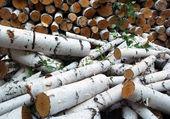 Backgrounds, Firewood — Stock Photo