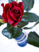 Red rose in a vase — Stock Photo