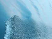 Sea wave background — Stock Photo