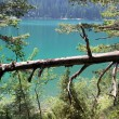 Stock Photo: Forest vegetation and lake