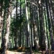 Forest trees - ecology wood — Stock Photo
