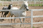 Konie — Zdjęcie stockowe