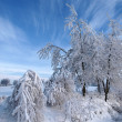 Winter landscape - Photo