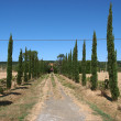 Stock Photo: Rustic road nearby VolterrTuscany