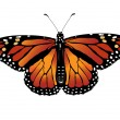 Vector illustration of monarch butterfly — Vettoriale Stock #1799635