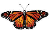 Vector illustration of monarch butterfly — Vettoriale Stock