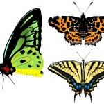 Vector illustration of butterfly — Stock Vector #1800630