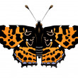 Royalty-Free Stock Vector Image: Vector illustration of   butterfly