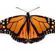 Vector illustration of monarch butterfly — Stock Vector #1800807