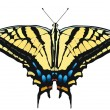 Royalty-Free Stock Vector Image: Vector illustration of Tiger Swallowtail
