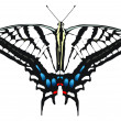 Vector illustration of Tiger Swallowtail — Stock Vector