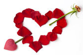 Day Valentine red rose — Stock Photo
