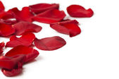 Day Valentine rose petals as background — Stock Photo