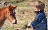 Boy feed horse — Stock Photo