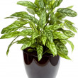 Plant - Stock Photo