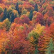 Vivid multi-colored autumn forest. — Stock Photo