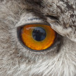 Owl eye - close-up — Stock Photo