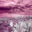Infrared shot of a desert scene — Stock Photo