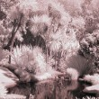 Stock Photo: Infrared shot of small overgrown pond