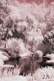 Infrared shot of a small overgrown pond — Stock Photo