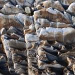 Rock background — Stock Photo #2499229