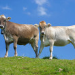 Royalty-Free Stock Photo: Swiss cows against blue sky