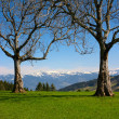 Royalty-Free Stock Photo: Two dry trees in mountains (Switzerland)