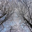 Stock Photo: Tree branches covered with white frost